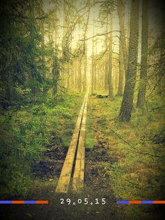 #skogsväg