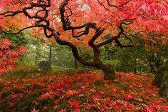 Bildresultat för autumn japan