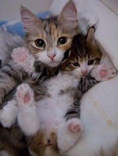 可愛い猫の親子画像20選!【猫画像まとめ】 - もふぬこ戦記