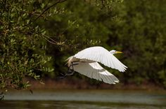 White Heron by District of Colombia, #Colombia #SomosTueismo