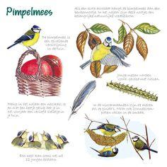 Educatieve wenskaart Pimpelmees, http://iturl.nl/snRFB