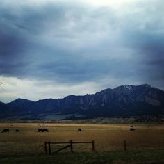 Cattle ranch against the Colorado Rocky Mountains. Between Denver and Boulder. Photo by jsoplop
