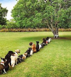 Deforestation Is Taking A Toll On The Dog Community - Pixdaus