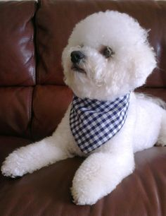 Stylish Dog / Pet Bandana Neckerchief in Gingham Check Blue Design all sizes available by OscarsDoggyBoutique on Etsy https://www.etsy.com/listing/198325806/stylish-dog-pet-bandana-neckerchief-in
