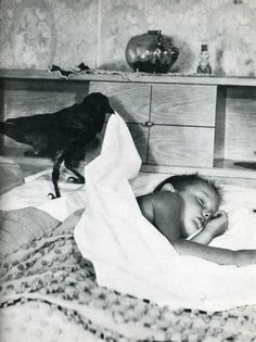 Crow tucks a little boy into bed.
