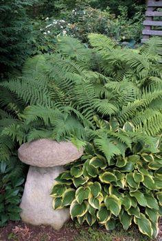 plants for dry shade: hostas, ferns