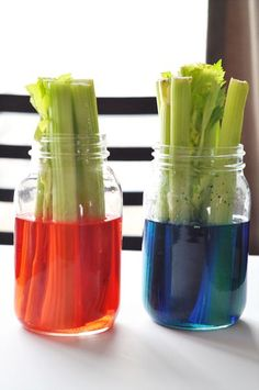 A fun science experiment for toddlers - celery and food coloring. I remember doing this as a kid w/ grape juice.