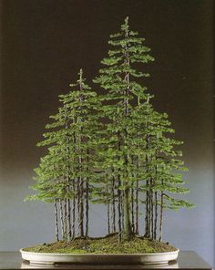 ♔ Bonsai 盆栽 #Bonsai #forest