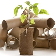 There is no need to buy expensive potting systems for starting seedlings. Place several cardboard toilet paper rolls inside a clean plastic clamshell, like those used for supermarket salads. Fill each cardboard tube with potting soil and plant. Once your seedlings grow too tall for the clamshell, simply tear off the top lid.
