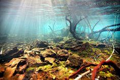 Lake Matano- Biotope Aquascape Idea Photograph by Chris Lukhaup. Aquarium Setup, Aquarium Design, Aquarium Fish, Aquarium Ideas, Nature Aquarium, Ancient Fish, Aquascaping Plants, Biotope Aquarium, Aquarium Backgrounds