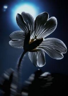 "magicalnaturetour:    ""IR Flower "" by EMERALD WAKE"