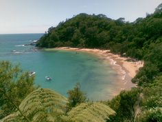 whale bay - New Zealand