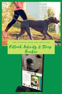 Stop Searching We Ve Found The Coolest Dog Products Online Dog
