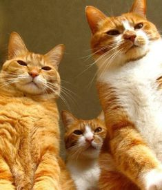 Ooh, don't they look mean……could they be Reservoir Cats ??