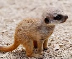 baby animals pics - Bing Images