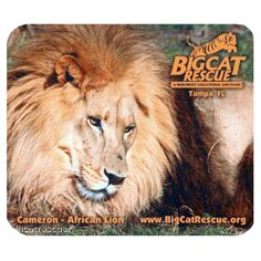 Mouse Pad - Lion Photo