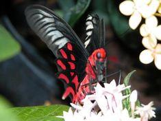 Photo of Smithsonian Butterfly Habitat Garden