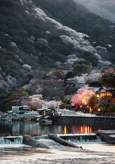 Cherry trees in full bloom, Arashiyama, Kyoto, Japan. Photography by Rickuz on Flickr