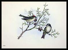 Bird Painting  Dusky Kinglet