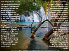 Rejoice in all the good + Celebrar todo lo bueno  Passage: https://www.biblegateway.com/passage/?search=deut+26%3A1-11&version=ESV;NVI;MSG;NCV;NLT