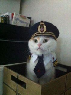Oui oui, je suis le capitaine de la boîte...