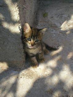 Cute kitten. Looks like my little one.