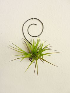 Hanging Air Plant.....i love these..gotta find them