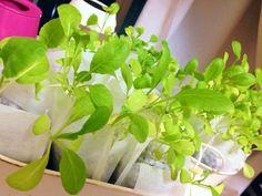 【屋内でも可能な水耕栽培】自作DIYや簡単に作れる品種とは (2ページ目) | iemo[イエモ]