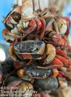 El Salvador - a fish market for photographers - crabs for sale on the Pier in La Libertad beach by @transamericas