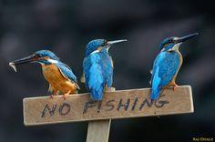 no fishing please by raj dhage on 500px