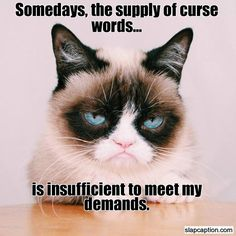 Some days, the supply of curse words is insufficient to meet Grumpy Cat's demands :)