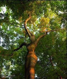 Amazing Tree Woman... Wow!