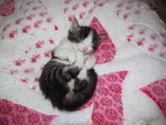 cutest ever pet beds - Google Search