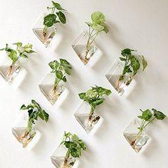 Mkono 2 Pack Wall Hanging Plant Terrarium Glass Planter, ... https://www.amazon.com/dp/B01FHFTBUC/ref=cm_sw_r_pi_dp_x_6lUYxb3NWDXBA