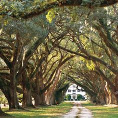 Love the trees!- by southern  living