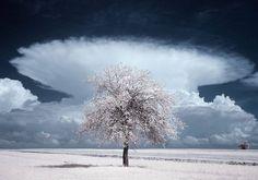 Infrared Photography of Nature – Fubiz Media