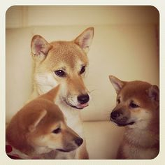 The one on the right looks JUST like my Kuma. Makes me wanna go home and squeeze him.