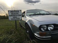 '78 Alfa Romeo Alfetta GTV, wildlife well worth conservation