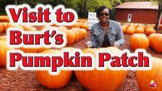 Field Trip to the Pumpkin Patch - LittleStoryBug Pumpkin Farm, Cute Pumpkin, Burts Pumpkin Patch, Pumpkin Patch Photography, Halloween Bucket List, Halloween Attractions, Pumpkin Patch Pictures, Pick Your Own Pumpkins, Best Pumpkin Patches