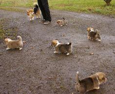 I'll take them all please