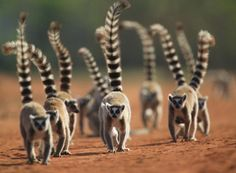 Madagascar Wildlife Holiday - is it on your bucket list? Read our blog here. http://www.ganeandmarshall.com/blog/madagascar-wildlife-holiday/