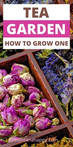 Garden Planter Boxes, Garden Plants, Healing Herbs, Medicinal Herbs, Container Gardening Vegetables, Herb Gardening, Flower Tea, Edible Plants, Tea Recipes