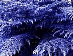 """La società degli uomini si fonda sull'ingiustizia e chiunque, da vittima, può trasformarsi in carnefice perpetuando l'iniquità."" (©Flory Brown)  --  ""The society of men is founded on injustice, any victim can become executioner perpetuating inequity.""(©Flory Brown)  --   Occhi misteriosi nel bosco di felci durante la notte. -- Mysterious eyes in the forest of ferns during the night.  --  (Photo by Flory Brown)"