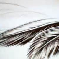 feathers - Yahoo Image Search Results