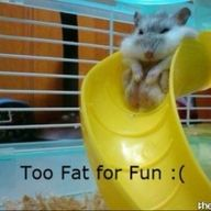 To Fat For Fun :(