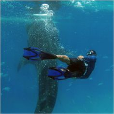whale-shark-watching-philippines