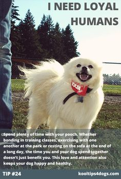 Dogs need loyal humans. Spend plenty of time with your pooch. Whether bonding in training classes, exercising with one another at the park or resting on the sofa at the end of a long day, the time you and your dog spend together doesn't just benefit you. This love and attention also keeps your dog happy and healthy.  www.koolcollar4dogs.com