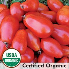 Tomato, Martino's Roma Organic- indispensable for tomato sauces and paste as it has less seeds and more fruit.