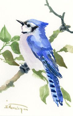 Blue Jay one of a kind original watercolor painting, bird art,  blue small original painting gift bird lover art by ORIGINALONLY on Etsy