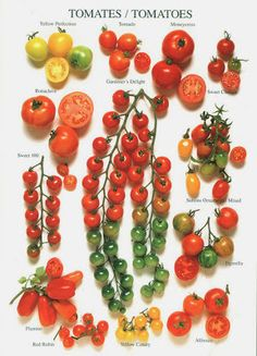 Tomato varieties. So many to chose from.